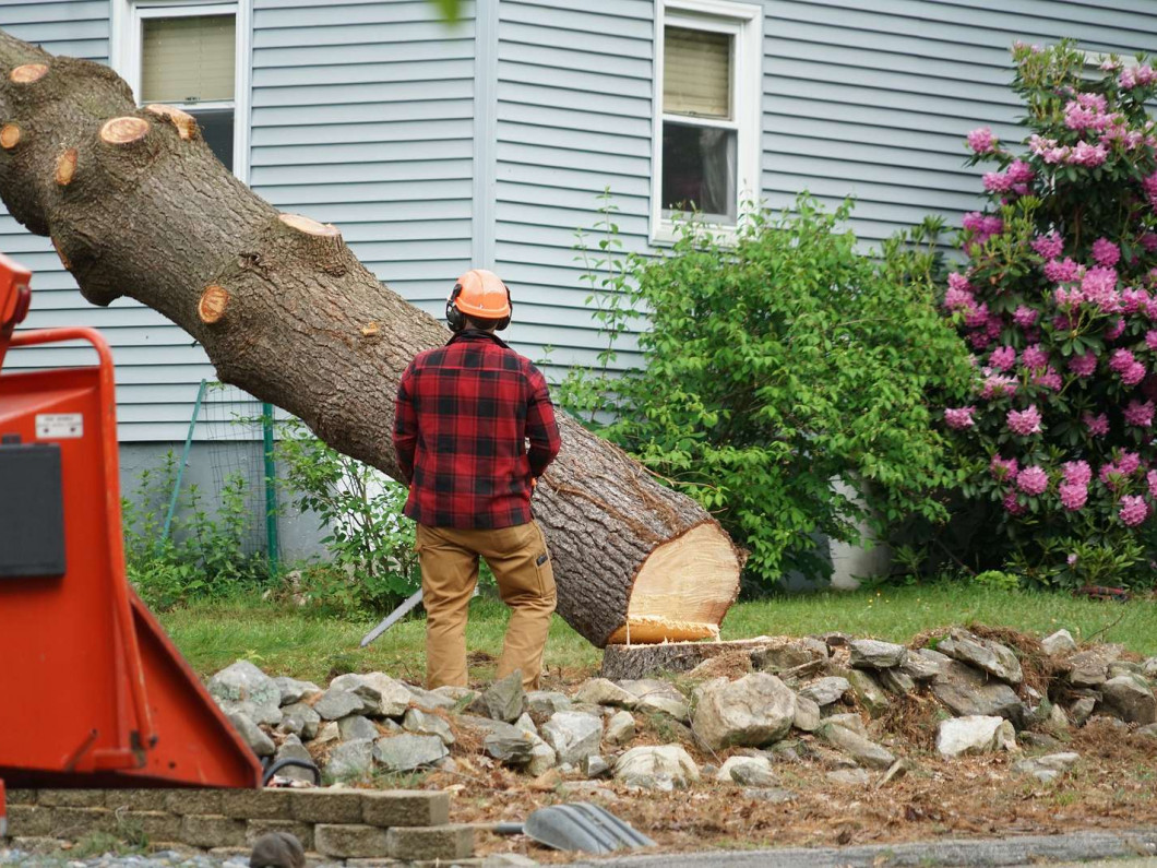 Call A Better Choice LLC for Emergency Tree Services
